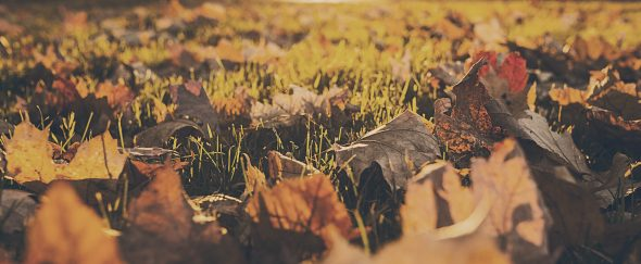 Featured image forIt's Called Fall for a Reason