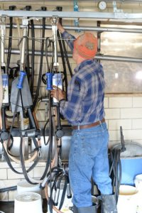 Dairy farmer inspects machinery with various tubes and pipes that helps him milk his cows.