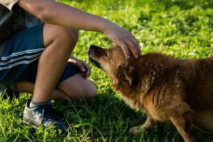 Boy pets dog.