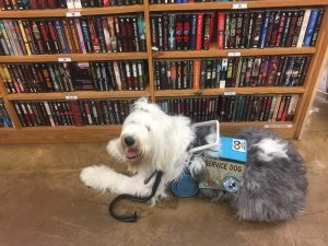 A sheepdog wearing a service dog cape and guide harness lies in front of a library bookshelf.